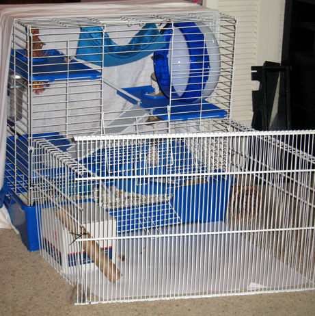 Cage_fence_2