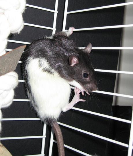 Jimmie2