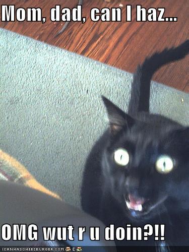 Funnypicturesmomdadsurprisedcat